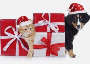 Animal cadeau de noel