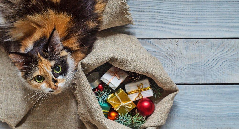Cadeau de noel pour chien et chat