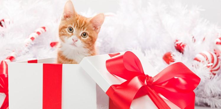 Un animal n'est pas un cadeau de noel